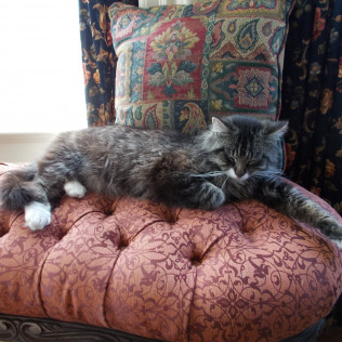 Rupert, our new B&B cat naps in The Drawing Room bay window on a bright sunny afternoon...