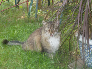 Furelle, the garden cat, being rather rude!